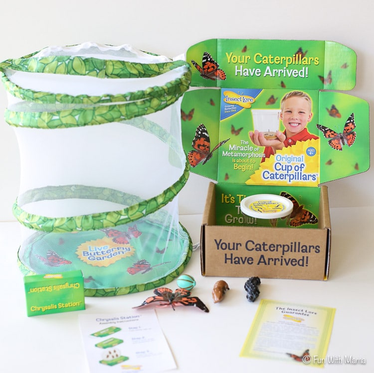 insect lore butterfly garden review