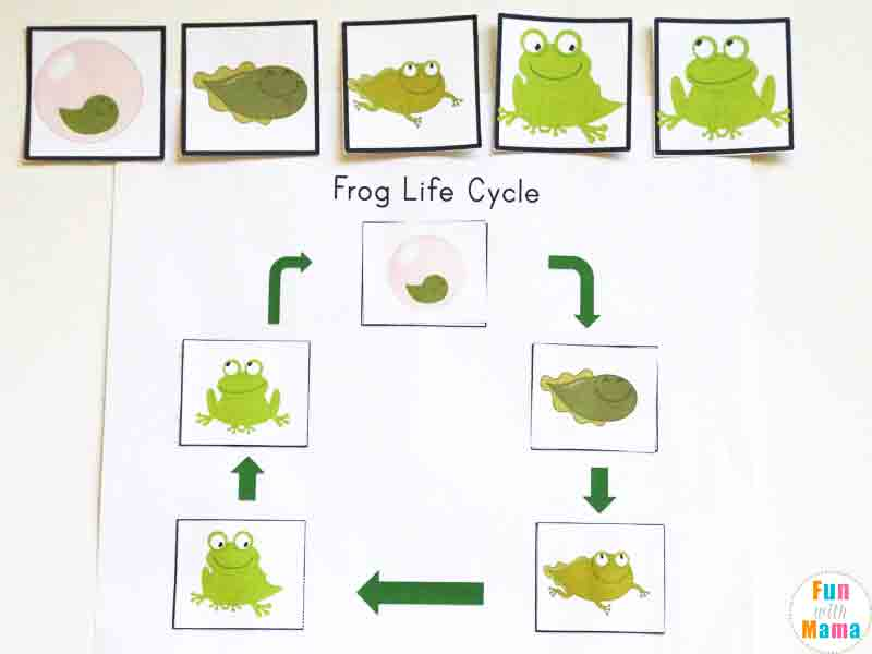 Life Cycle Of A Frog For Kids Fun With Mama