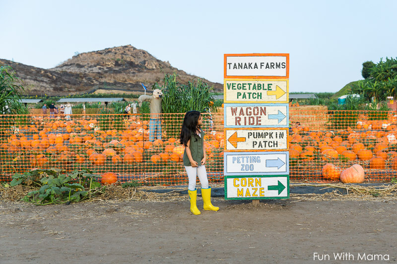 irvine pumpkin patch
