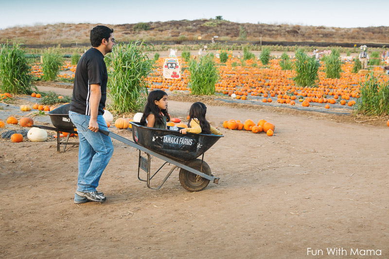 pumpkin patch orange county