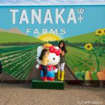 Tanaka Farms Irvine Pumpkin Patch