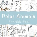 Polar Animal Activities