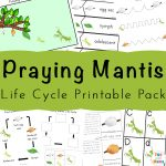 Praying Mantis Life Cycle Printable Pack