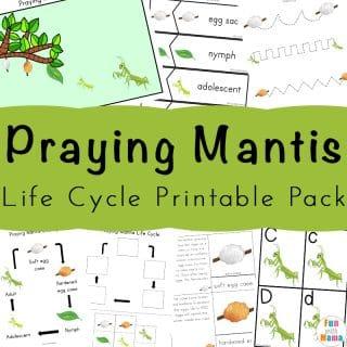 Praying Mantis Life Cycle Printable Pack