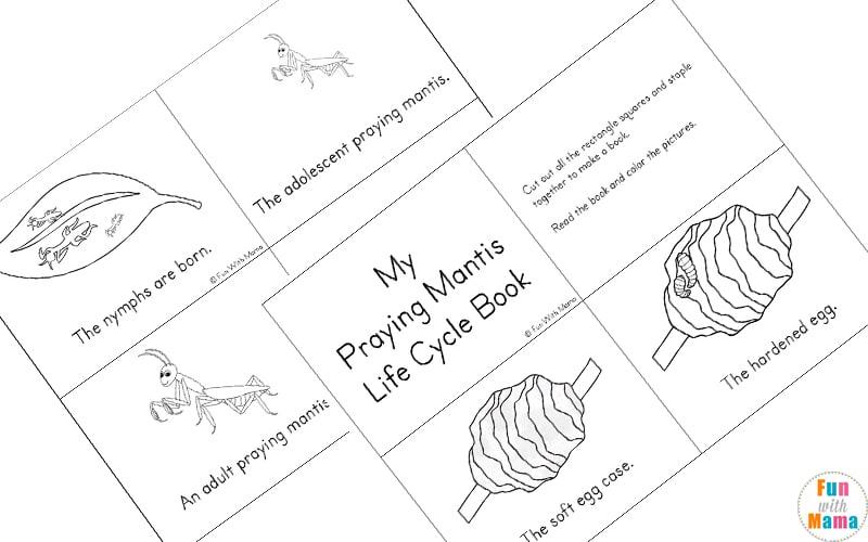Praying Mantis Life Cycle Printable Pack Fun With Mama