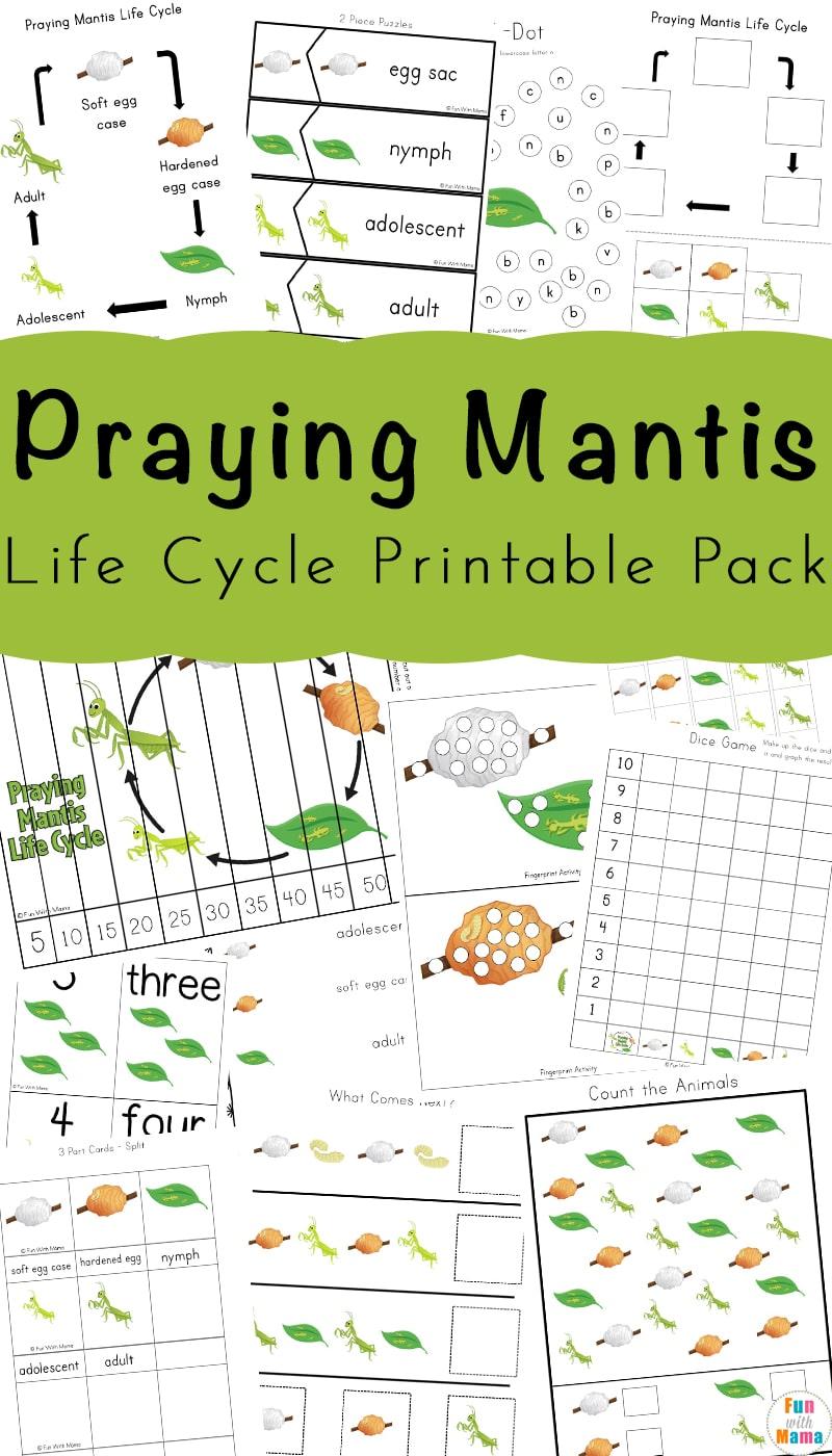 Praying Mantis Life Cycle Printable Pack - Fun with Mama