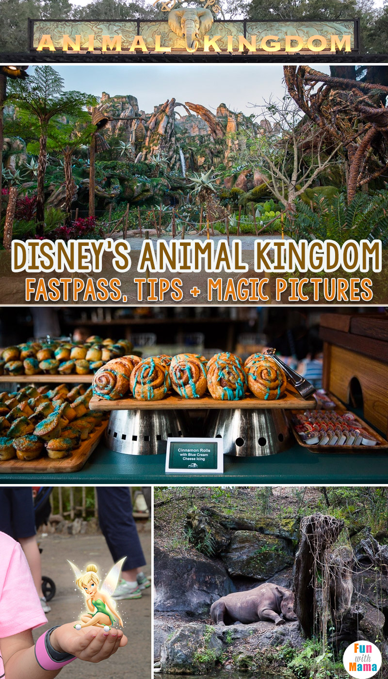 Disney world animal kingdom fastpass tips