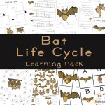 Bat Life Cycle Facts For Kids