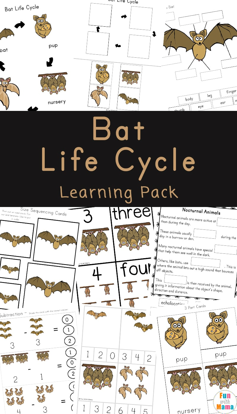 This bat life cycle activity pack includes fun bat facts for kids. #lifecycle #preschool #homeschool