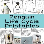 Penguin Life Cycle