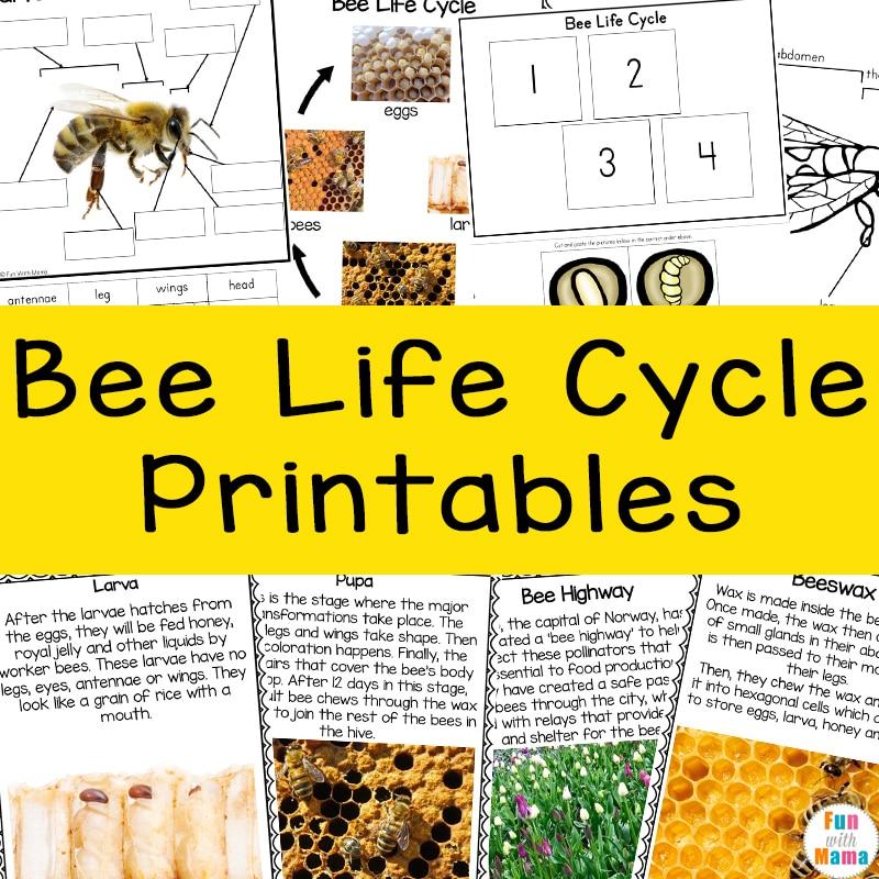 bee life cycle printables
