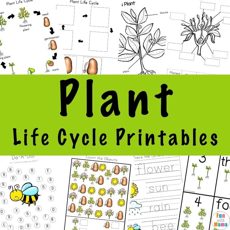 Plant-Life-Cycle-Printables-a