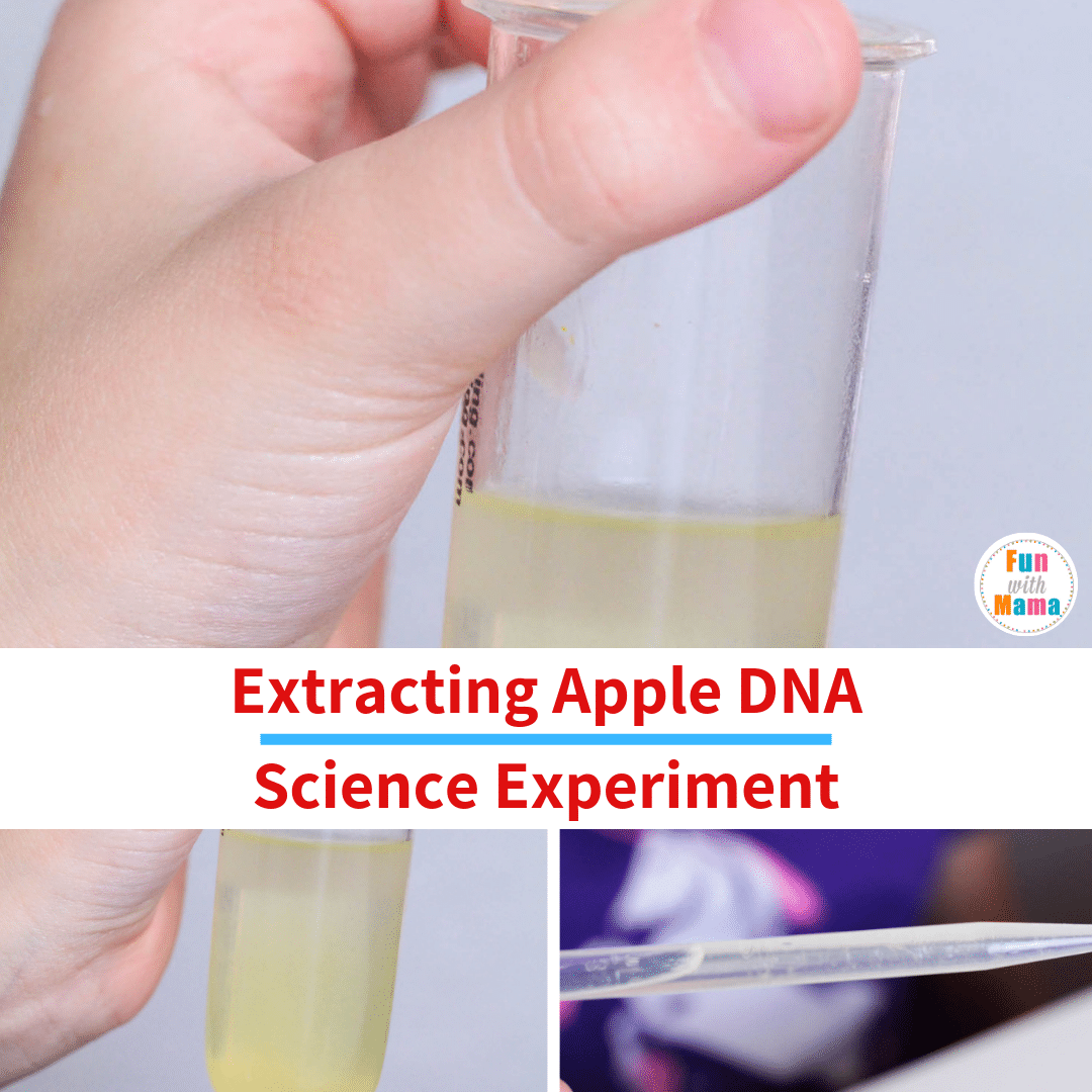DNA extraction lab science experiment