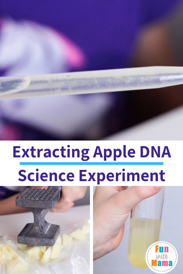 extracting DNA from an apple