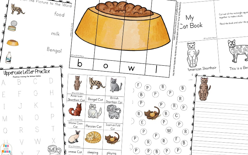 preschool printable worksheets about cats