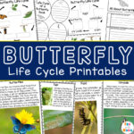 Life Cycle of a Butterfly Printable Pack