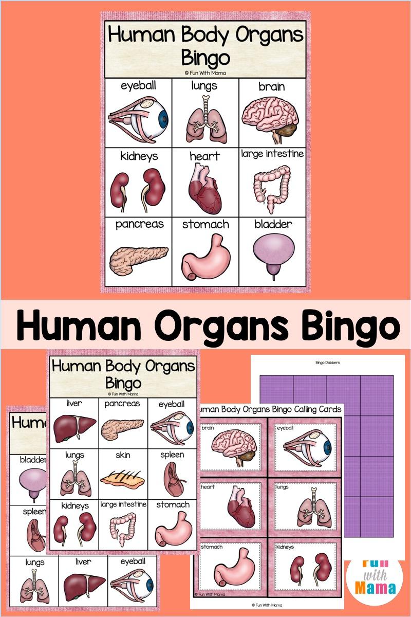 human organ bingo for kids