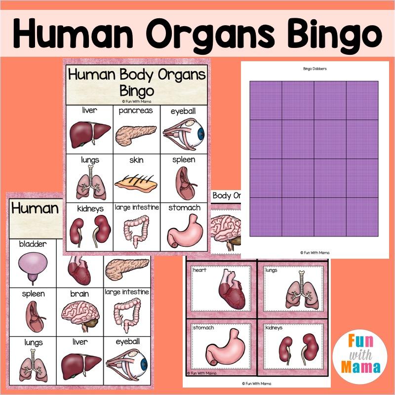 human organs bingo printable