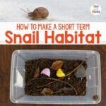Snail Habitat – How to make a Snail Terrarium
