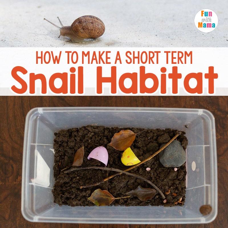 DIY snail habitat