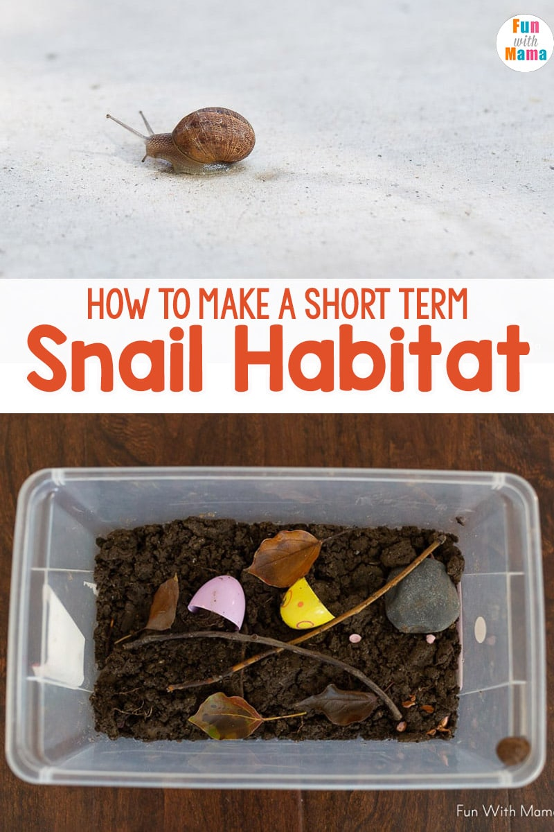 Snail Habitat How To Make A Snail Terrarium Fun With Mama