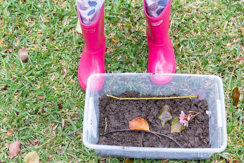 staging the snail habitat