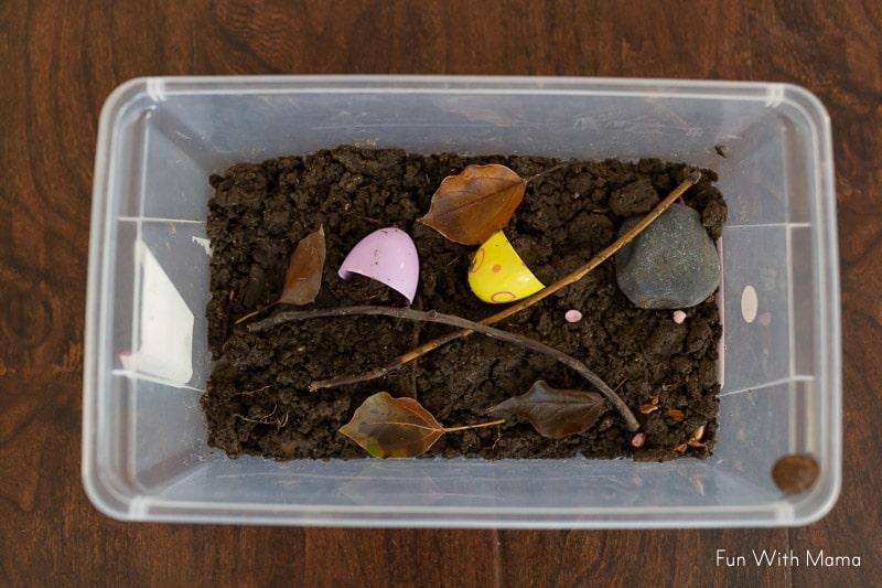 snail habitat in a plastic box