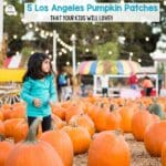 5 Best Pumpkin Patches in Los Angeles